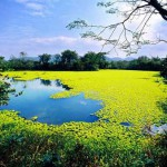 El Parque Nacional Humedales de Xixi