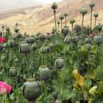 El origen de las guerras del opio