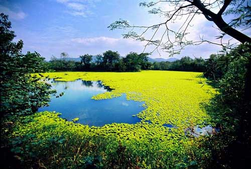 Humedales de Xixi