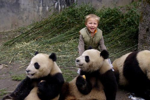 Parque de osos panda