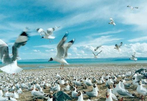 Bird Island, paraíso de los pájaros en Xining