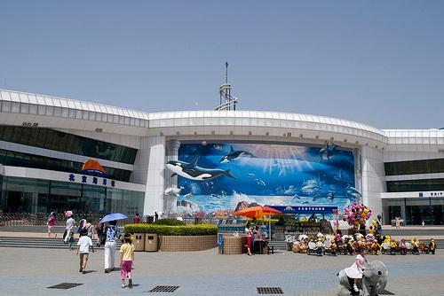 Acuario de Pekin