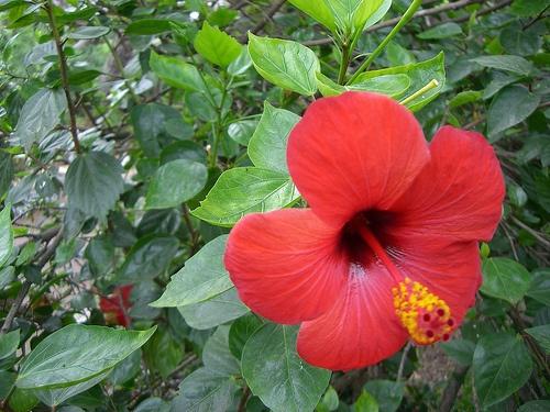 Paraíso natural en el Jardín Bai o Bai Yan
