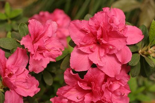 Flores en el Jardin Bai o Bai Yan