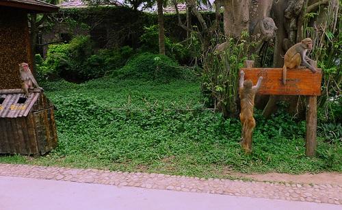 Isla de los Monos Nanwan