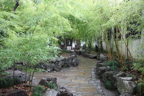 Bambú en el Jardin Yuyuan en Shanghai