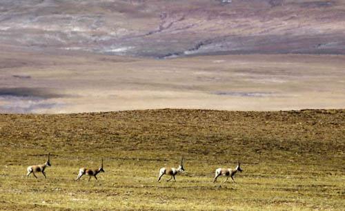Naturaleza en Tibet