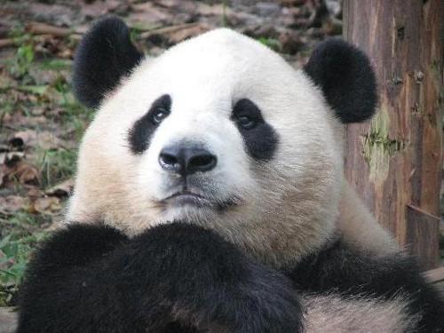 Zoo Chengdu